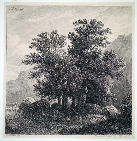 Francois DIDAY (Svizzera, 1802 – 1877) – GRUPPO DI ALBERI (1875