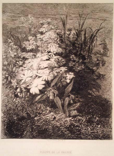 Gustave GREUX (Francia, 1838 – 1919) – FLEUR DE LA PRAIRIE