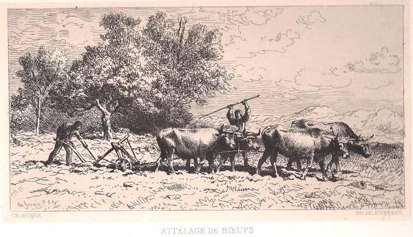 Charles JACQUE (Francia, 1813 – 1894) – ATTELAGE DE BOEUF (1866)