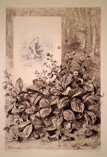 Fritz KROSTEWITZ (Austria, 1860 – 1913) – LE PIANTE (1886)