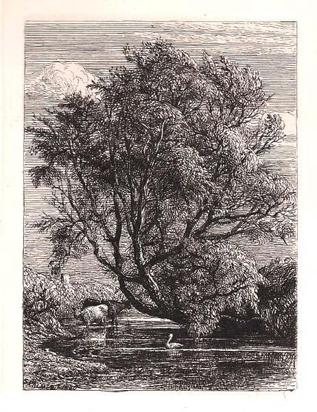 Stuart PALMER (Gran Bretagna, 1805 – 1881) – THE WILLOW (1850)