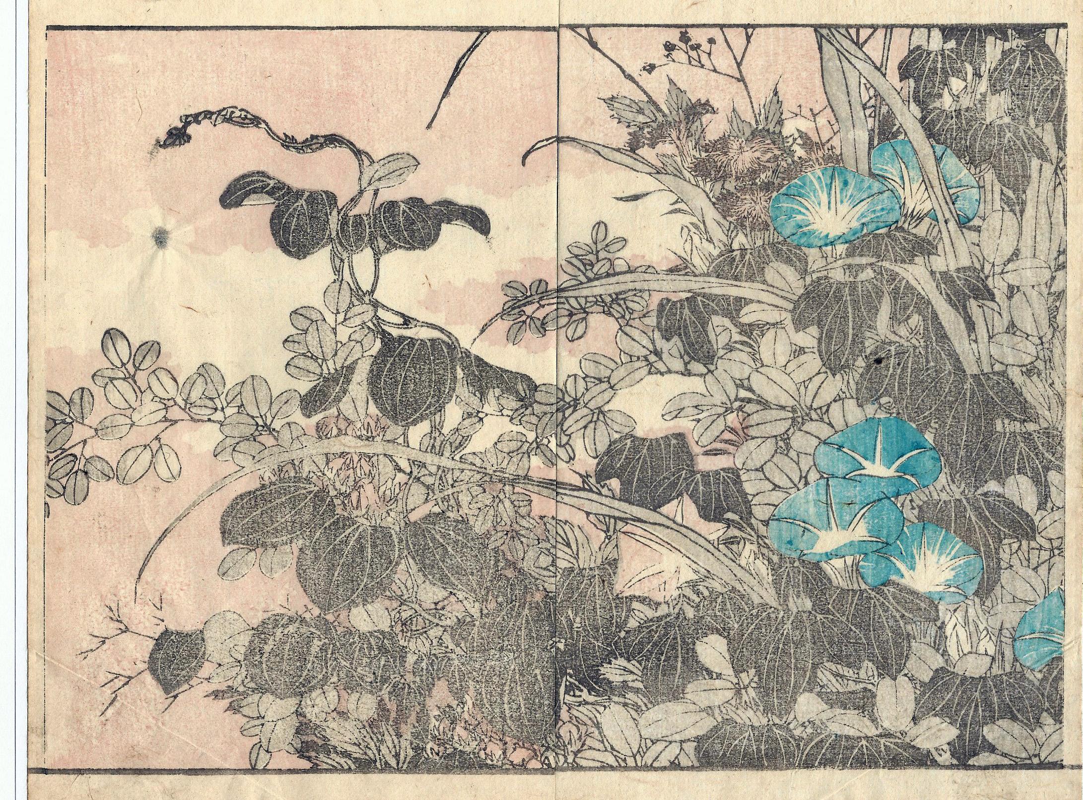 Katsushika HOKUSAI (Giappone, 1760 – 1849) – FIORI