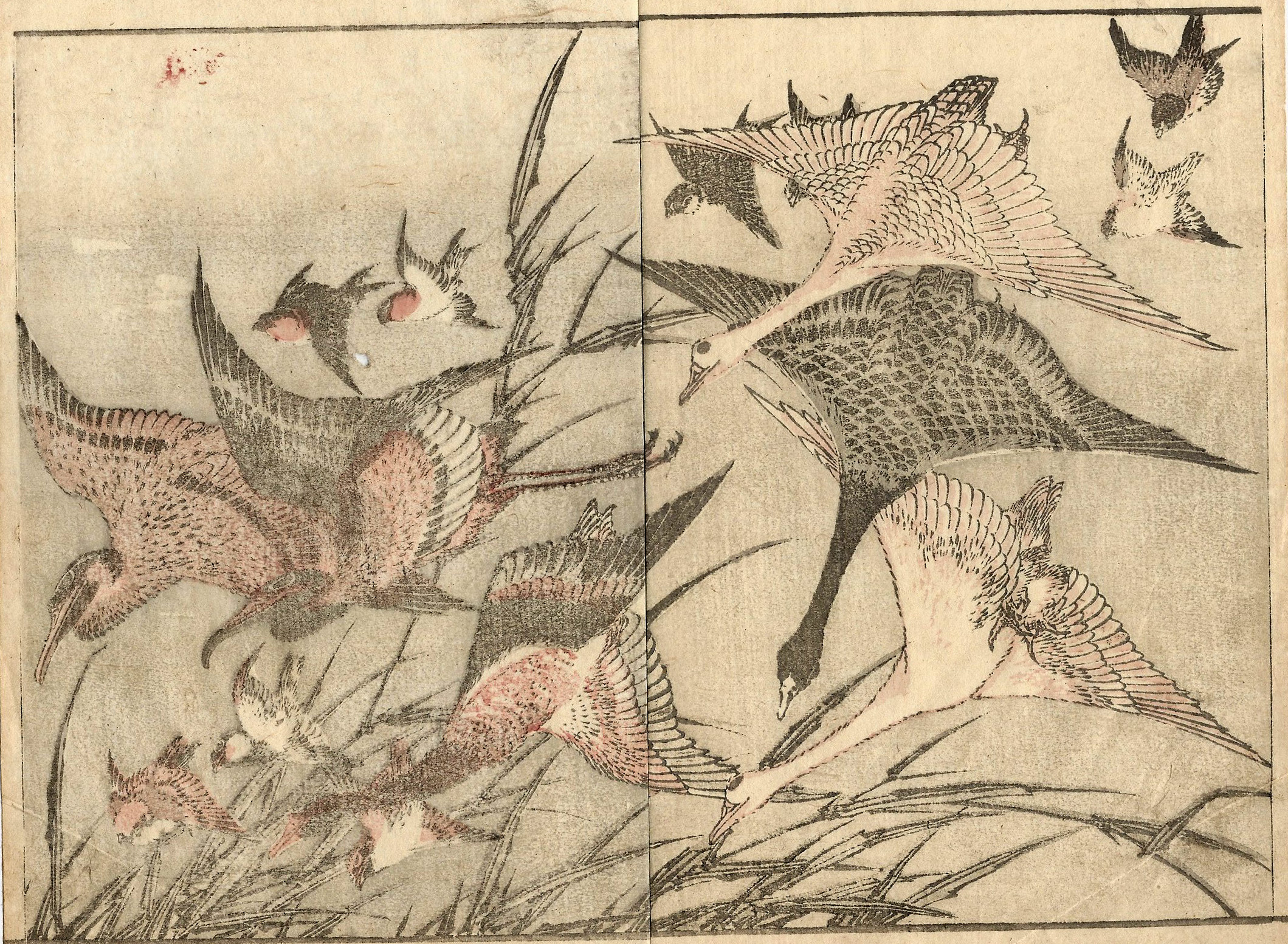 Katsushika HOKUSAI (Giappone, 1760 – 1849) – UCCELLI IN VOLO TRA LE CANNE