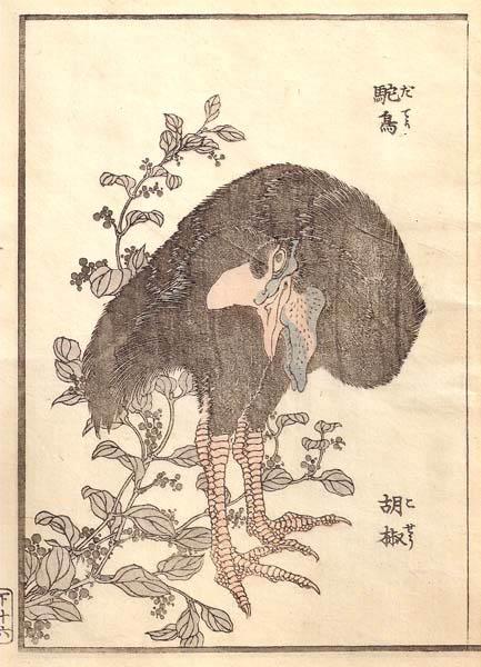 Katsushika HOKUSAI (Giappone, 1760 – 1849) – IL CASUARIO