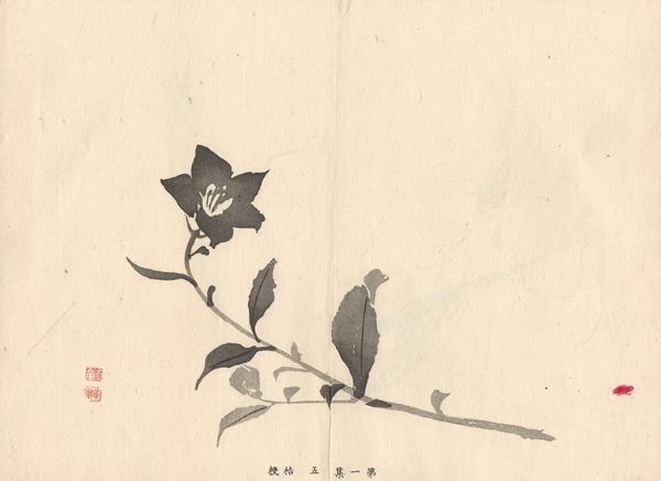 Kawabata GYOKUSHO (Giappone, 1842 – 1913) – CAMPANULA