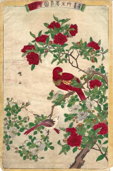 Watanabe GYOZAN (Giappone, attivo alla fine del XIX secolo) – PAPPAGALLO E BOCCIOLI DI MELOGRANO