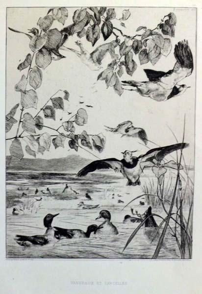 Félix BRACQUEMOND (Francia, 1833 – 1914) – VANNEAUX ET SARCELLES (1863)